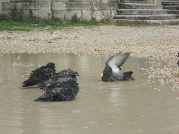 Birds taking a time out to bathe in the puddles left over from an earlier rainstorm